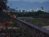 夕刻の流れ橋
