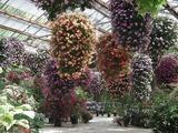 加茂花菖蒲園 多目的温室