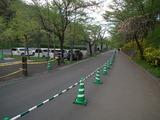 羊山公園 交通規制