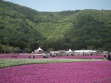 富士芝桜まつり 富士山うまいものフェスタ会場