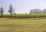 美瑛の丘 パッチワークの路�