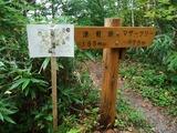 津軽峠からマザーツリーへ
