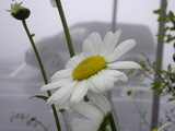 大笹牧場レストハウスの前に咲いていました