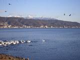 2月の諏訪湖