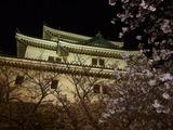 和歌山城天守閣と桜の花
