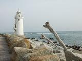 伊良湖岬灯台と流木