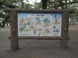 名勝三保の松原 付近の地図