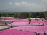 富士芝桜まつり 展望広場からの景色
