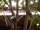 恋人岬 東屋の奥には鍵の付いた木が・・・