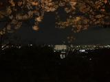和歌山城からの夜景