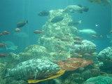 足摺海洋館 海洋水槽