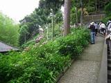 鎌倉 長谷寺 眺望散策路 入口付近
