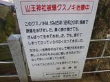 山王神社被爆クスノキ治療中の看板