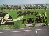 2013年 田んぼアート 第二会場
