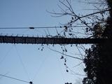 黒滝吊橋 下から見た様子