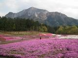 芝桜の丘と武甲山�