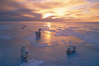 global-warming-ice-packs
