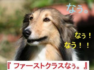 dog-new-york