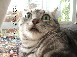 ネコ-驚きの画像