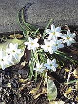白い綺麗なお花