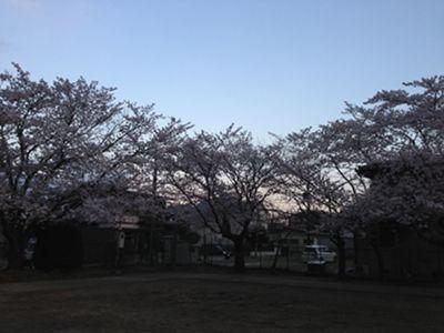 okunosakura1_300