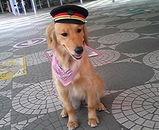 ジャッキー 犬