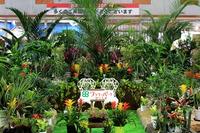 観葉植物展