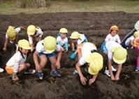1(吹上浜海浜公園)さつま芋収穫体験