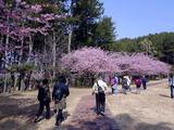 春の散策会