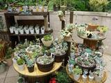 3夏休みの植物展