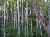 工房近くの竹林