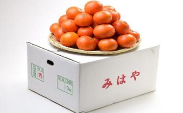 【韓国】日本で開発された新品種のミカンが、韓国で無断栽培されていたwwwww日本側の対応は?
