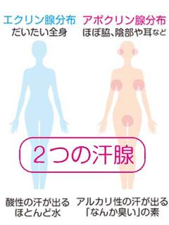 チチガアポクリン腺