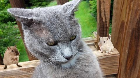cat-1545174_960_720