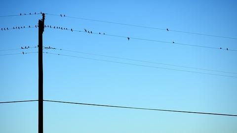 birds-1030919_640