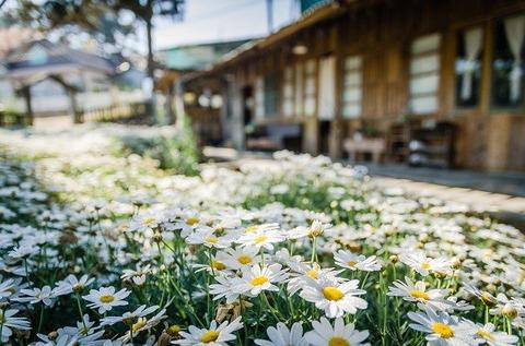 flowers-4390337_640