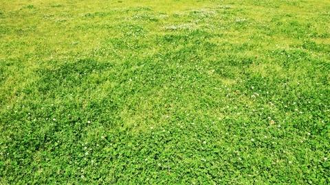 のり面芝生