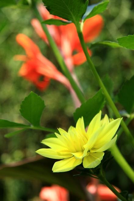 御岳の花5