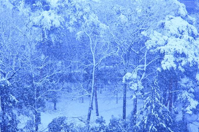 雪3200