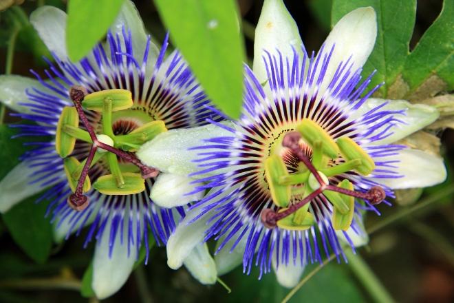 御岳の花2