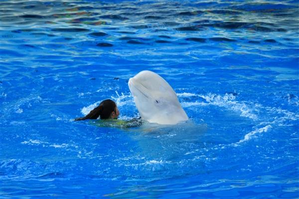 白イルカ3