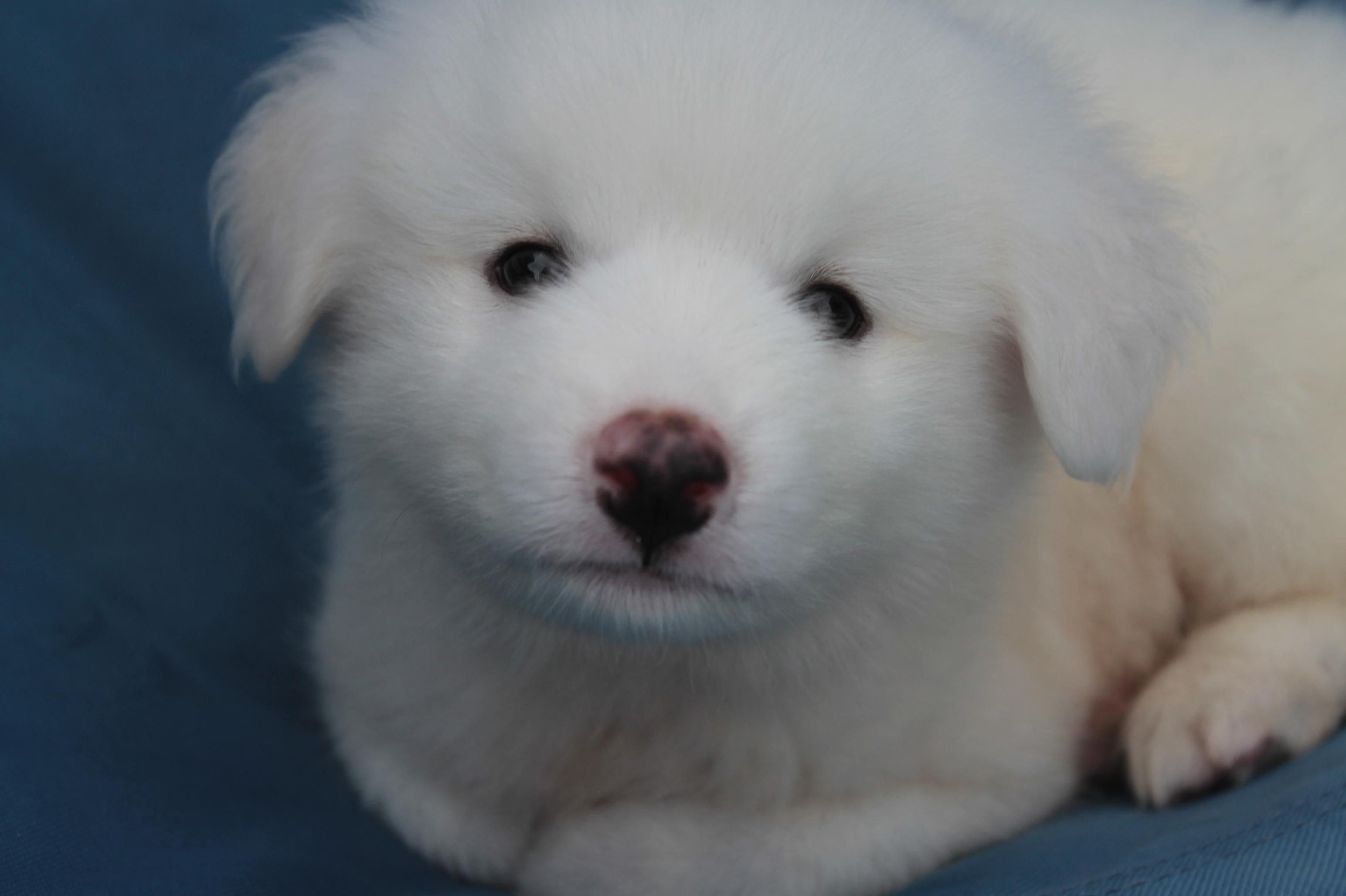 ワタシの家族紹介。雑種犬のリリエンタール。 : こころに五穀豊穣 @howata_1 @沢田マンション @高知