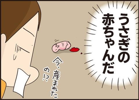 20190310うさぎの赤ちゃん3