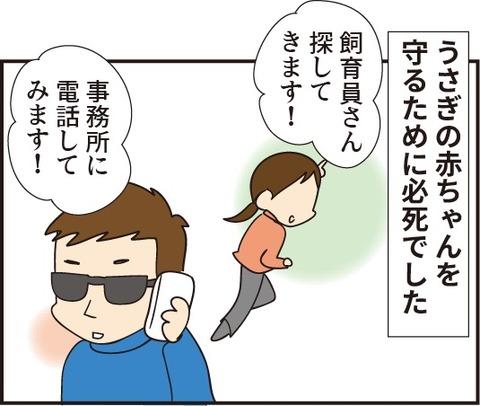 20190310うさぎの赤ちゃん6
