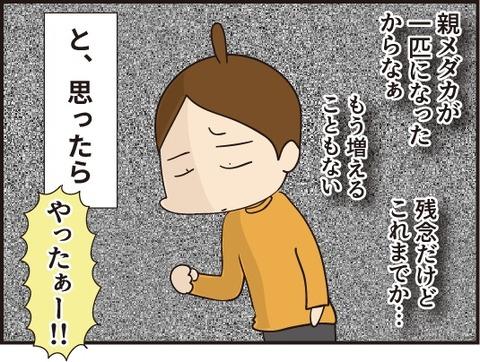 20191104赤ちゃんメダカ3
