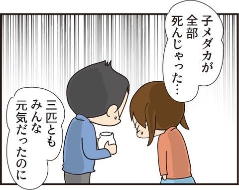 20191104赤ちゃんメダカ2