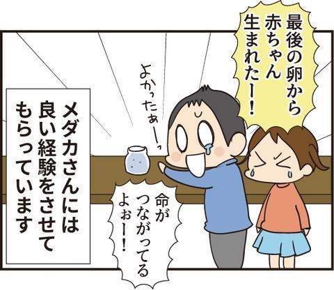 20191104赤ちゃんメダカ4