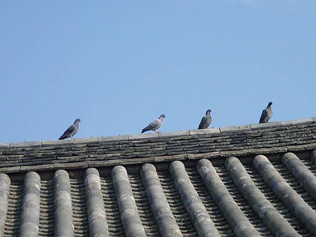 法隆寺 東院伽藍 四脚 門 鳩