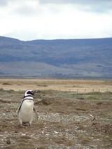 ペンギンソロ