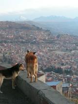 犬とラパス